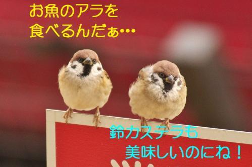 120_20120108212410.jpg