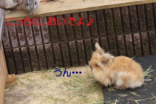 120_20120131202631.jpg
