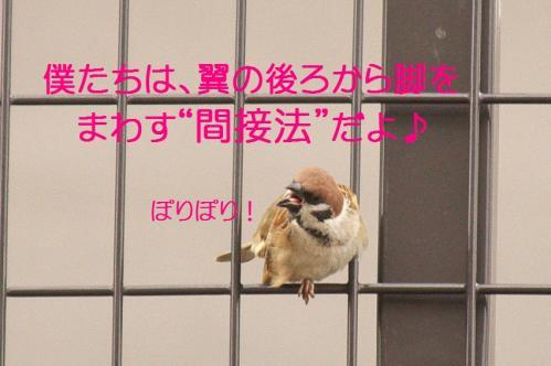 120_20120215214703.jpg