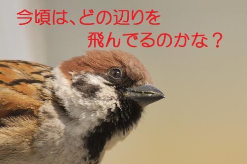 120_20120414204543.jpg