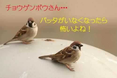 130_20101204222522.jpg