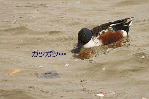 130_20101210214601.jpg