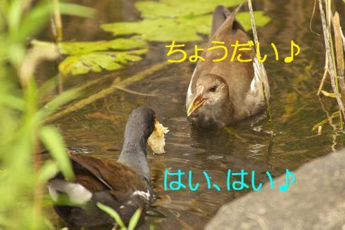 130_20110829224957.jpg