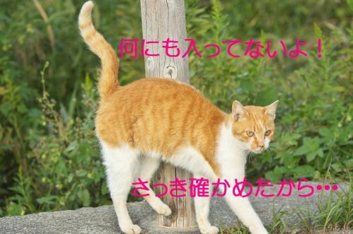 130_20111004221633.jpg