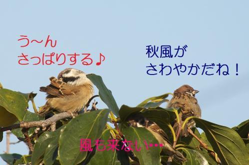 130_20111017220615.jpg