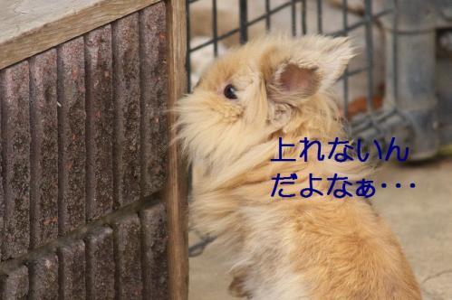 130_20120131202630.jpg