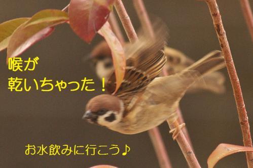 130_20120213220226.jpg