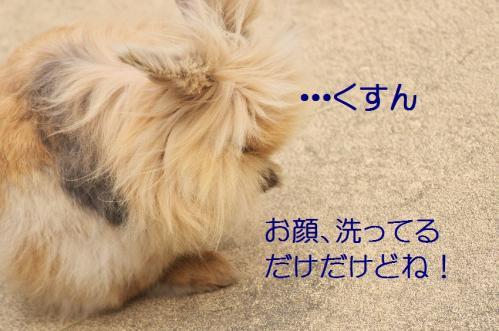 135_20120131202629.jpg