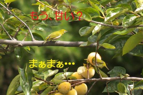 13_20101010201652.jpg