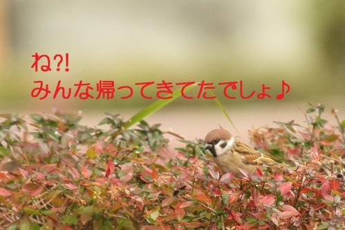 140_20101210214600.jpg