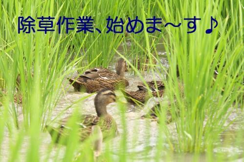 140_20110801222634.jpg