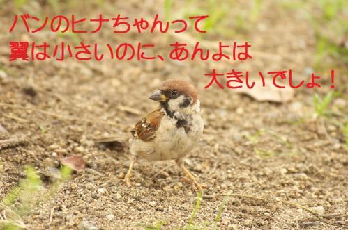 140_20110830214424.jpg