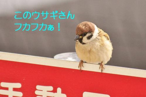 140_20120131202719.jpg