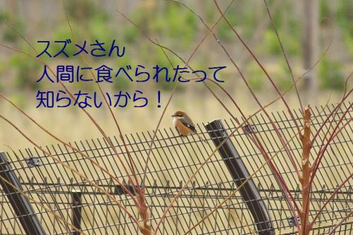 140_20120202223154.jpg