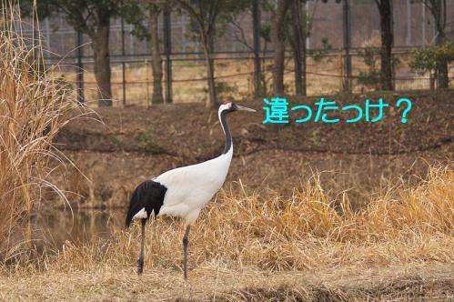 140_20120212190757.jpg