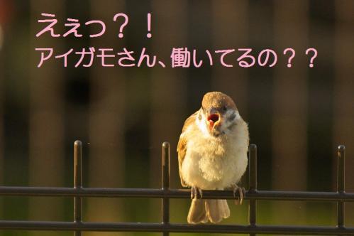 150_20110801222633.jpg