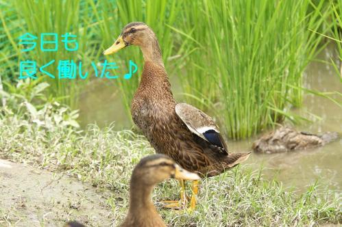 160_20110801222632.jpg