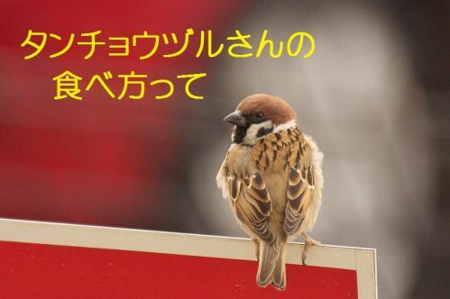 170_20120214222319.jpg