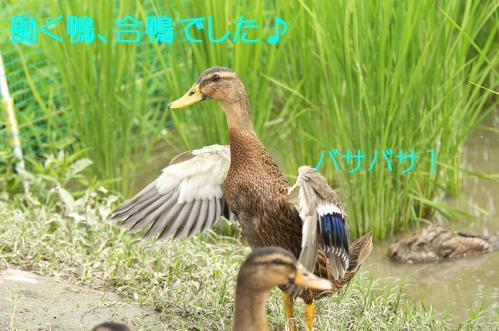 180_20110801222631.jpg