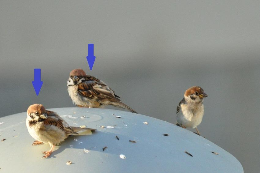が 黄色い くちばし 身近な野鳥の識別講座④ 幼鳥図鑑