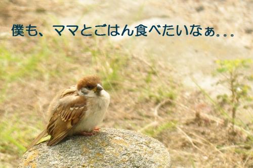 CSC_2074.jpg