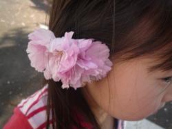 八重桜ガール
