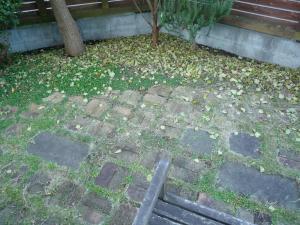 落ち葉のお庭