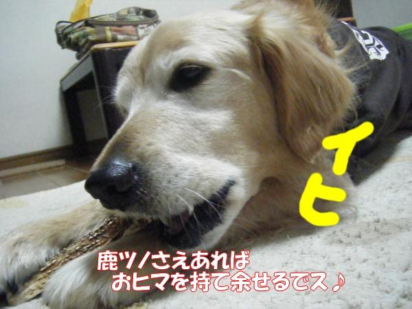 DSCF4024_20130304021905.jpg
