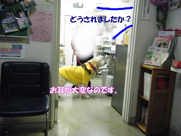 DSCF6025_20130210005348.jpg