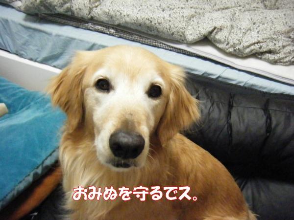 DSCF6172_20130219010835.jpg