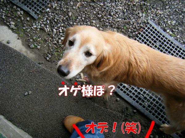 DSCF6181_20130220012028.jpg