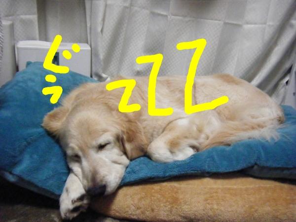 DSCF6259_20130227012641.jpg
