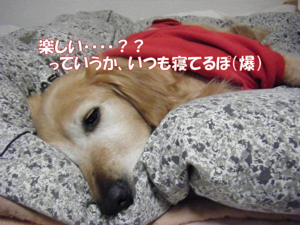 DSCF6267_20130311234012.jpg