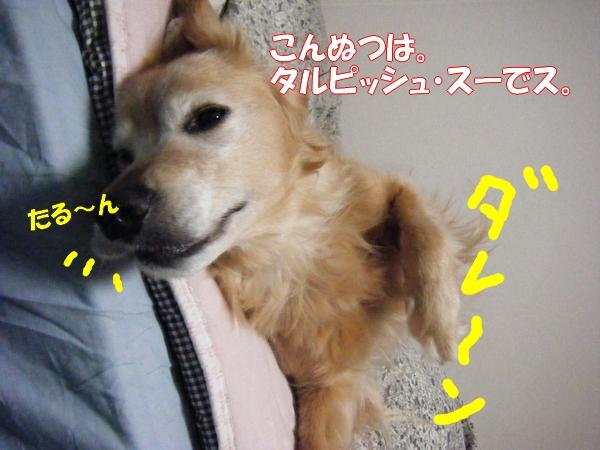 DSCF63311.jpg