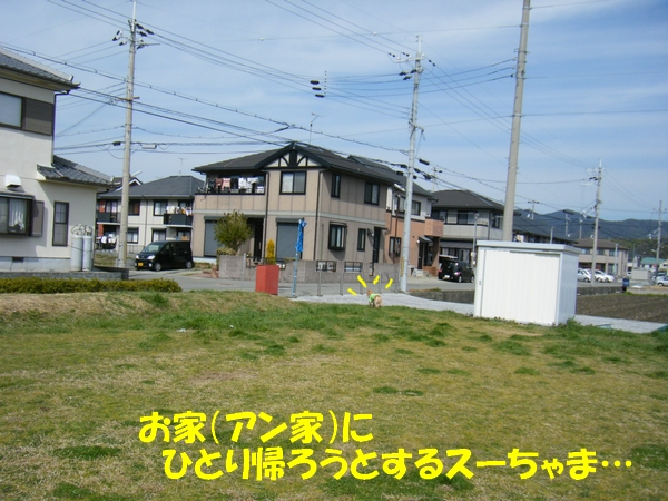 DSCF6427_20130319001031.jpg