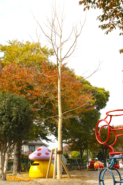 2010.11.16植樹