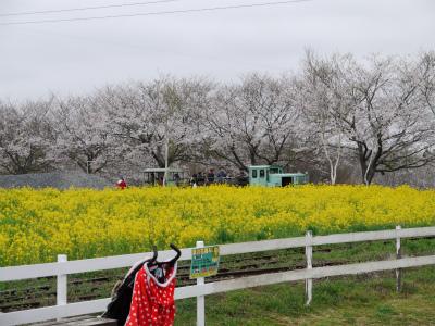 20130330成田ゆめ牧場