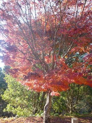 131206熊野古道小辺路25