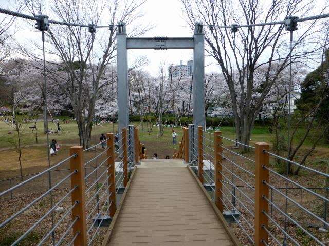 砧公園の吊り橋6