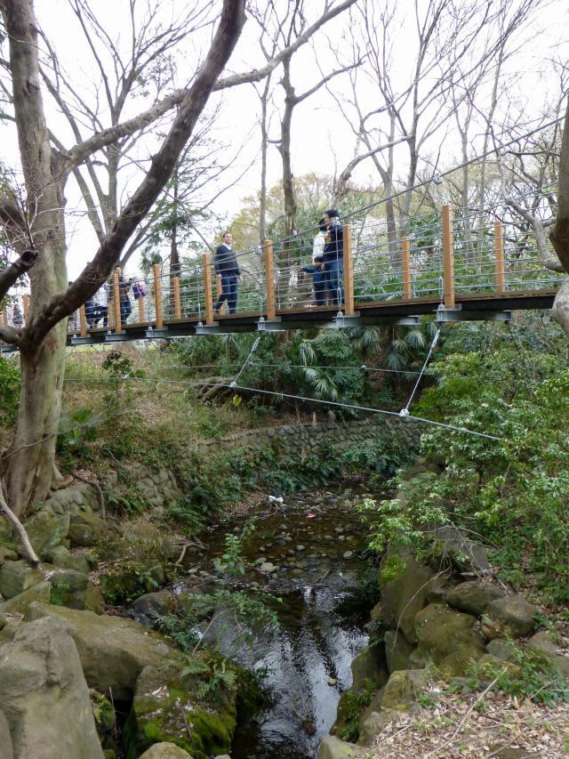 砧公園の吊り橋0
