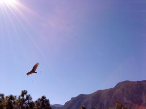 Las Aguilas 2.6 10:52am
