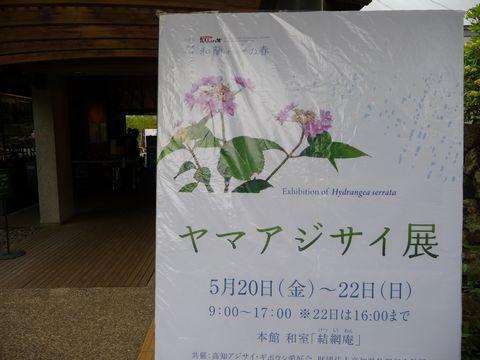 山紫陽花展