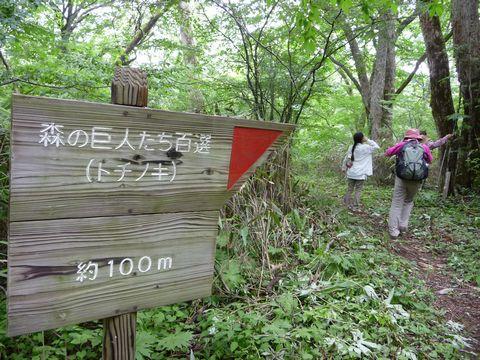 森の巨人案内板
