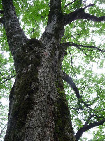 森の巨人1