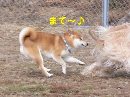 待って~♪