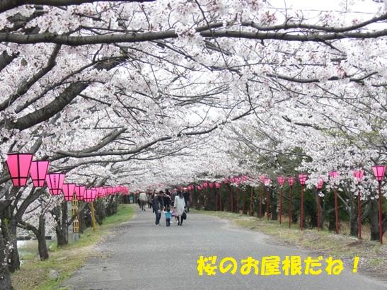 桜の屋根だね