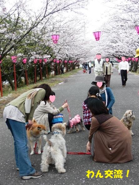 桜の下でわん交流