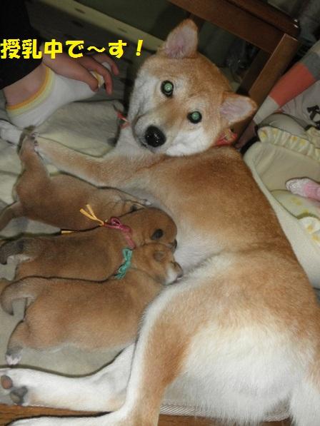 ママとお子柴ちゃん