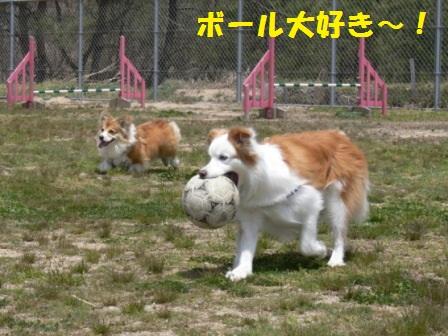 ボール大好き!