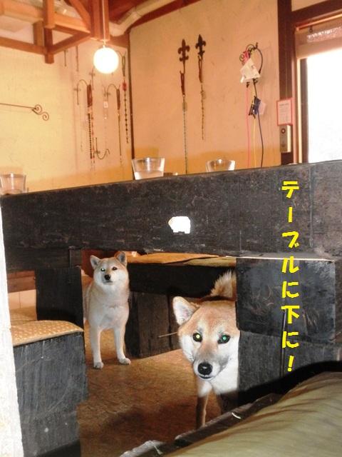 テーブルの下にも